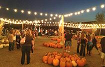 pumpkin patch qld